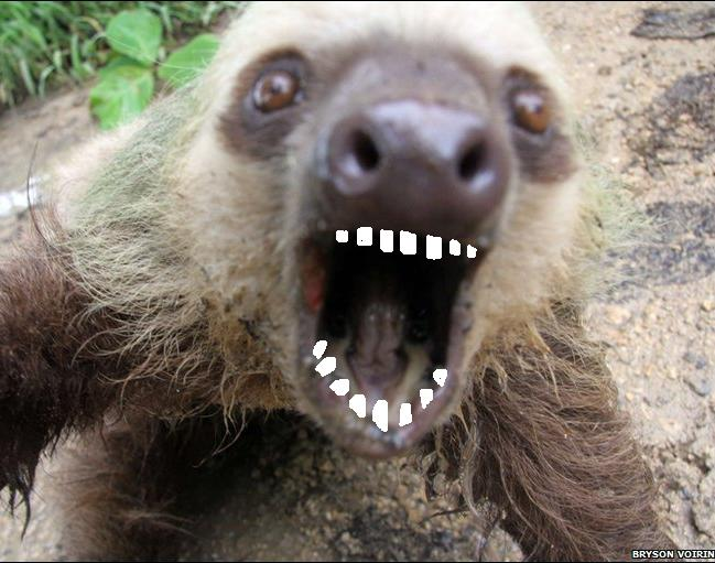 Sloth Smiling With Teeth | www.pixshark.com - Images ...